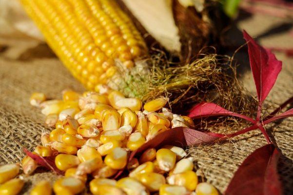 Диета на кукурузной каше, диетические рецепты и отзывы похудевших