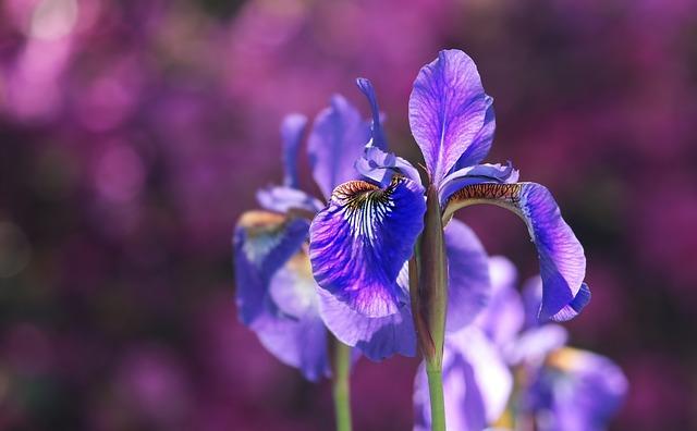 Что означает в психологии, если человек любит фиолетовый цвет?